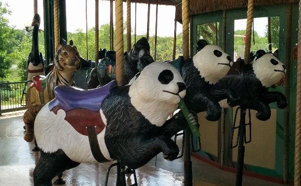 写真・図版 : オクラホマシティー動物園にパンダはいないが、人気動物を集めた園内のメリーゴーランドではライオンなどと一緒にぐるぐると回っていた=2018年5月21日、オクラホマシティー動物園。吉岡桂子撮影