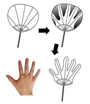 写真・図版 : 図1:団扇と、指のでき方