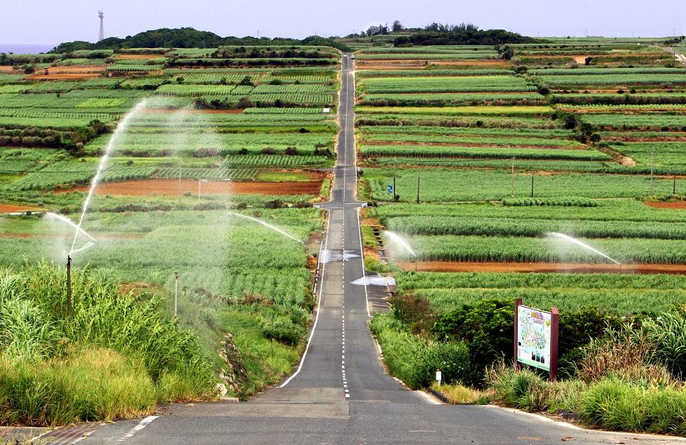 写真・図版 : 喜界島に広がるサトウキビ畑