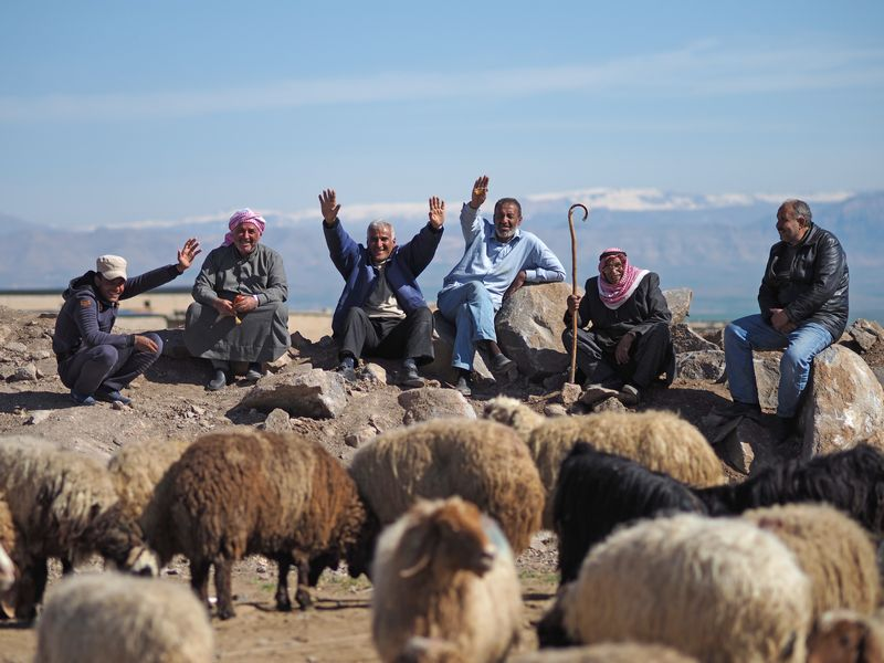 写真・図版 : 広場の羊市。遠くに見える山の端にはまだ雪が残る(写真はいずれも筆者撮影)