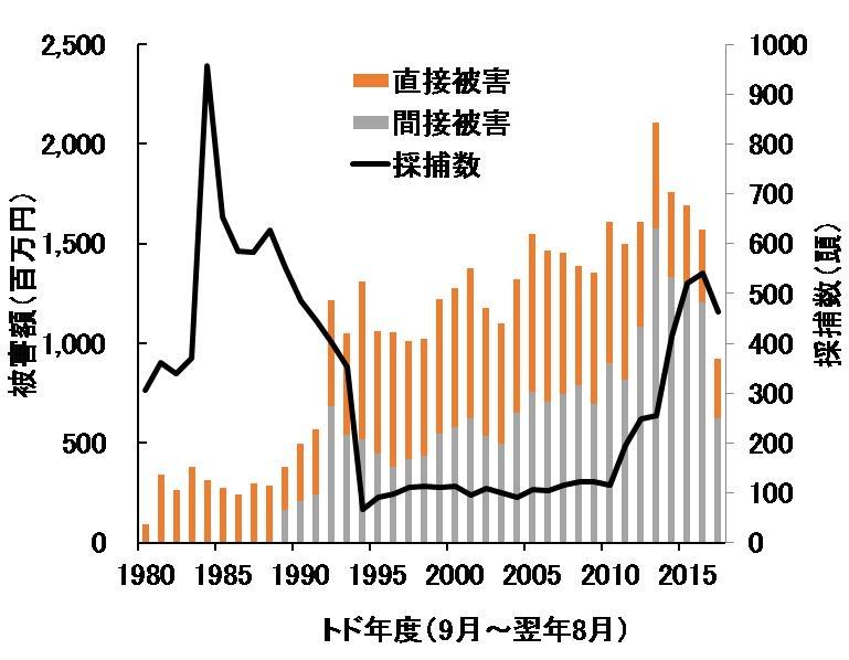 写真・図版 : 図2:トドの国内採捕数と漁業被害額の推移(水産庁資料より)。直接被害とは漁網の破損等の被害、間接被害とは漁獲物の食害や刺し網等の敷設数の減少等の被害