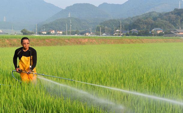 """""""減反廃止""""でも米生産が増えない本当の理由"""