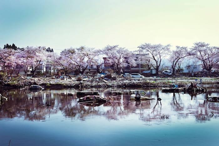 写真・図版 : 2011年4月末に咲いた気仙沼の桜。写真集『True Feelings』から