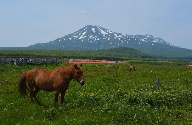 写真・図版 : 日ロ両政府が認めるビザなし交流で択捉島を訪れた。散布山(1582メートル)をのぞむ草原=2016年7月、筆者撮影