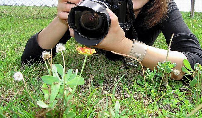 写真・図版 : 喜界島の喜界空港付近の「特攻花」=2005年9月16日