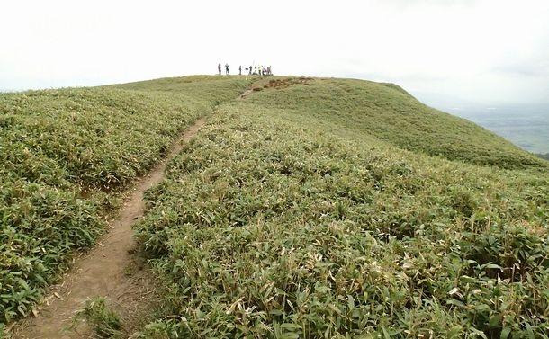 写真・図版 : なだらかな山頂付近にササ原が広がる竜ケ岳