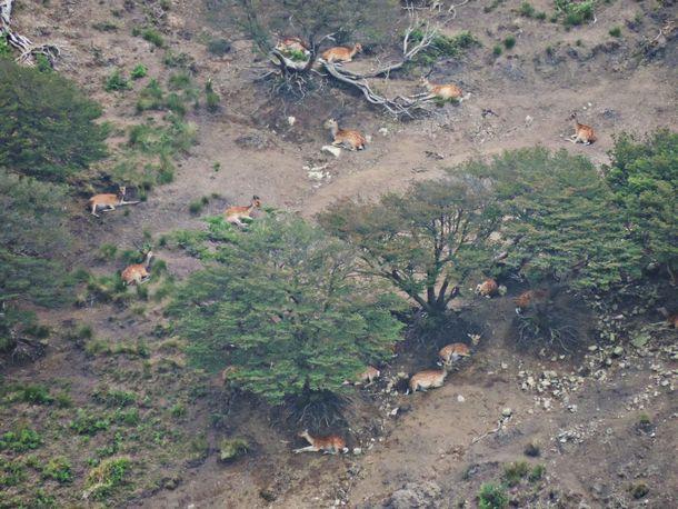 写真・図版 : 鈴鹿の山で見かけたニホンジカの群れ。周辺を含めると50頭ほどいた
