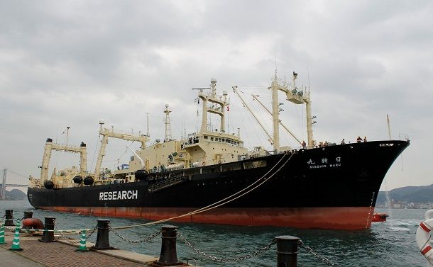 国際捕鯨委員会脱退で得るもの、失うもの(上)