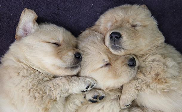 写真・図版 : 眠りのメカニズムは未解明だ