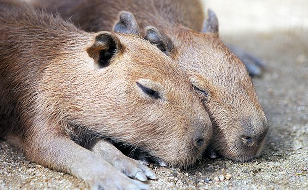 写真・図版 : 動物はなぜ眠るのか