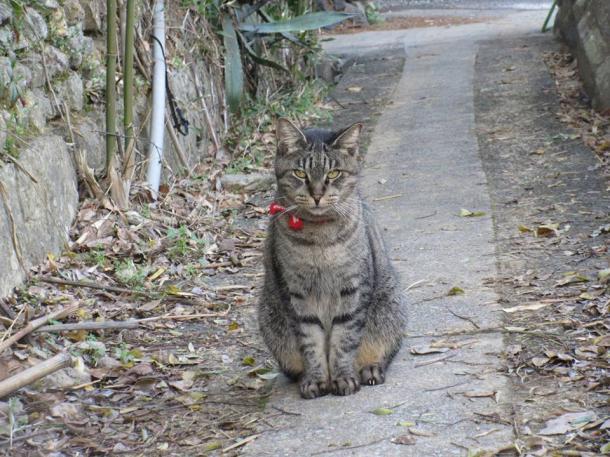 写真・図版 : 出迎えてくれた猫=撮影・筆者