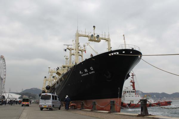 写真・図版 : 南極海の調査捕鯨から戻り、下関市あるかぽーとに着岸する捕鯨母船の日新丸=2014年4月