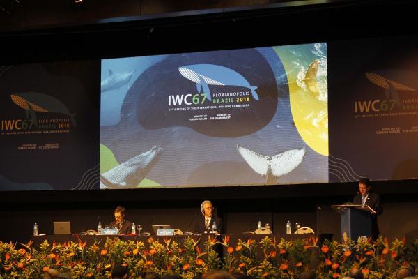写真・図版 : 元水産官僚でIWC日本代表の森下丈二・東京海洋大学教授(中央)は、IWC第67回総会では議長を務めた=2018年9月、ブラジルのサンタカタリーナ州フロリアノポリス