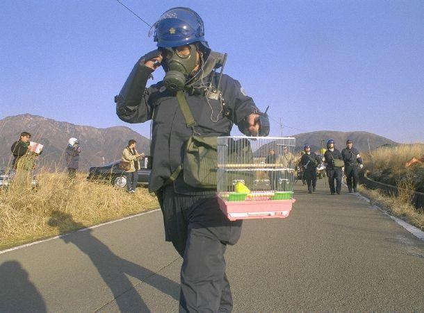 写真・図版 : 防護服に身を固め、カナリアの入った鳥かごを手にオウム真理教施設へ捜索に向かう捜査員ら=1995年3月22日、当時の上九一色村