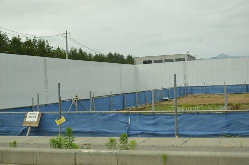 写真・図版 : 放射性セシウムの移行を抑制する試験栽培=2017年6月28日、福島県大熊町