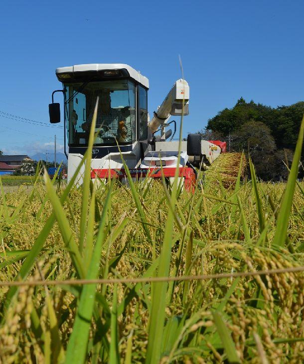 写真・図版 : 新しい酒米「夢ささら」の刈り取り風景=2018年9月28日、栃木県大田原市