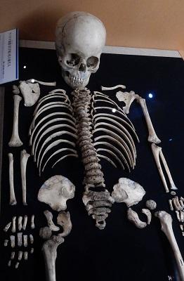 写真・図版 : アバクチ洞穴遺跡で発見された弥生時代の幼児人骨。DNA解析から男児とわかった=国立科学博物館の企画展「砂丘に眠る弥生人」の展示
