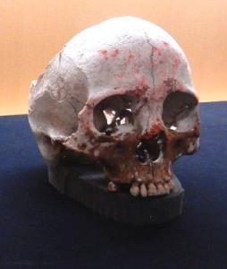写真・図版 : 渡来系弥生人としてDNA解析の対象となった安徳台遺跡5号人骨=国立科学博物館の企画展「砂丘に眠る弥生人」の展示