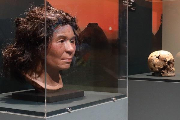 写真・図版 : 遺伝子が関与する特徴を考慮した縄文人女性の復顔像(左)。右は、もととなるDNA解析をした北海道礼文島の船泊遺跡から出土した23号人骨の頭骨=国立科学博物館で2018年に開かれた特別展「人体」における展示