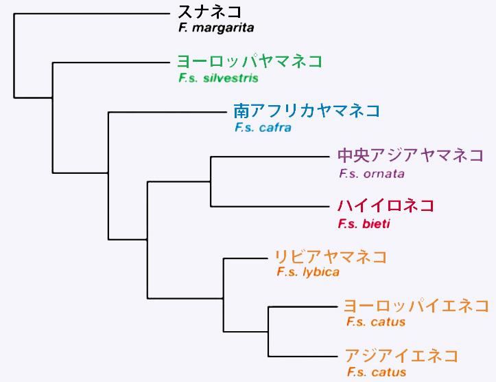写真・図版 : DNA解析された猫の系統樹。サイエンス掲載の図を編集部で整理