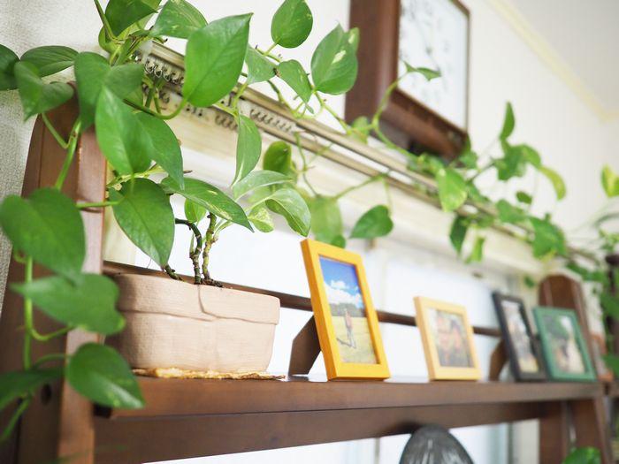 写真・図版 : ホセさんの自宅にある小さな観葉植物は、日本に来た直後に購入して以来ずっと一緒に暮らしてきたものだ。一人暮らしの寂しさを癒やしてくれた大切な相棒だったという。今でも元気に葉を伸ばしている