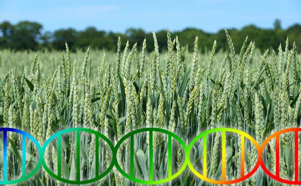 ゲノム編集食品の流通で起きること
