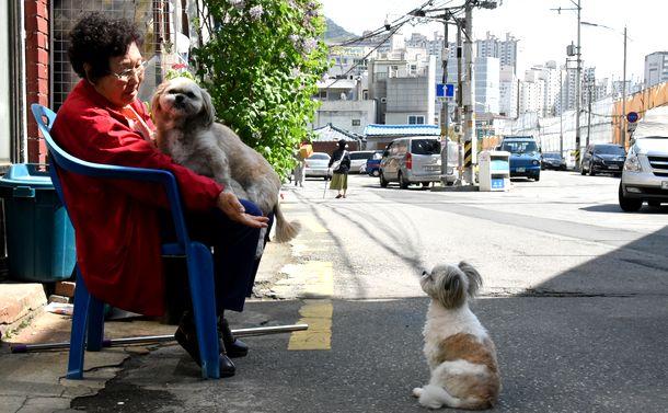 写真・図版 : 貧困や孤独など高齢者の暮らしの厳しさが社会問題になっている韓国。老後の安心は人々の切実な願いだ=2017年4月、ソウル