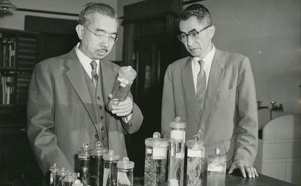 皇居内の研究所で微生物「ヒドロゾア」を観察する昭和天皇。右は東大臨海実験所長で理学博士の富山一郎氏、1961年4月