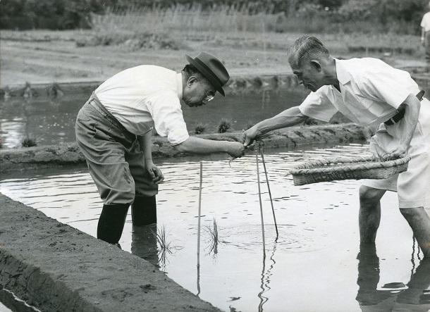 皇居内の水田で田植えをする昭和天皇1964年5月
