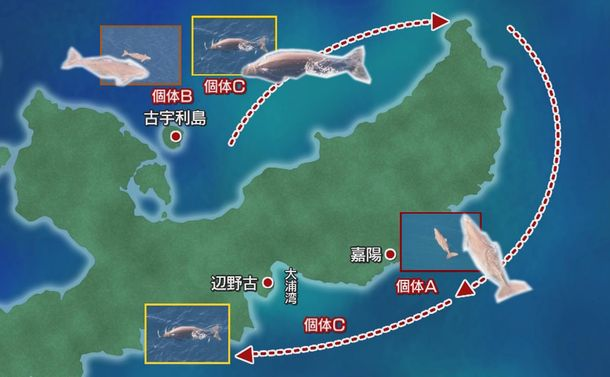 写真・図版 : ジュゴン生息地地図(琉球朝日放送提供)