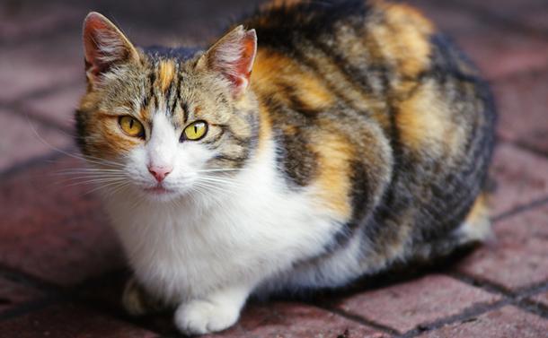 野生ネコがもたらす害と人間の責任を考える