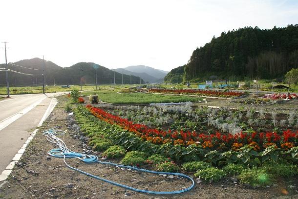 写真・図版 : 津波で被災した土地に種をまいて育てた花畑=2012年、岩手県陸前高田市、瀬尾夏美撮影