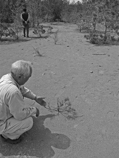 写真・図版 : ほぼ50年もの間、盆栽のような松しか生えていない土地。100人を超える米軍元将兵が沖縄での枯れ葉剤被害の救済を米政府に訴え、何人かは枯れ葉剤散布などを自ら証言。米陸軍の元高官は沖縄タイムズの取材に、1960年から2年間、北部訓練場内と周辺一帯で強力な枯れ葉剤「オレンジ剤」の試験散布を証言した。沖縄の施政権は1972年に日本に返還されたが、当時の佐藤栄作政権は、本来米国が負担すべき土地の原状回復費用を日本が肩代わりしてやり、さらにその事実を最後まで隠し通そうとした=沖縄県東村高江