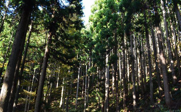 森の国で育む「森林文化」のこれから