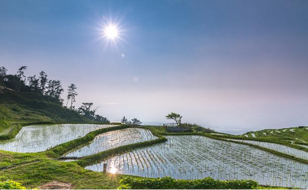 農産物の輸出が伸びない本当の理由