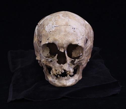 写真・図版 : 船泊遺跡の23号人骨の頭骨=いずれも国立科学博物館提供