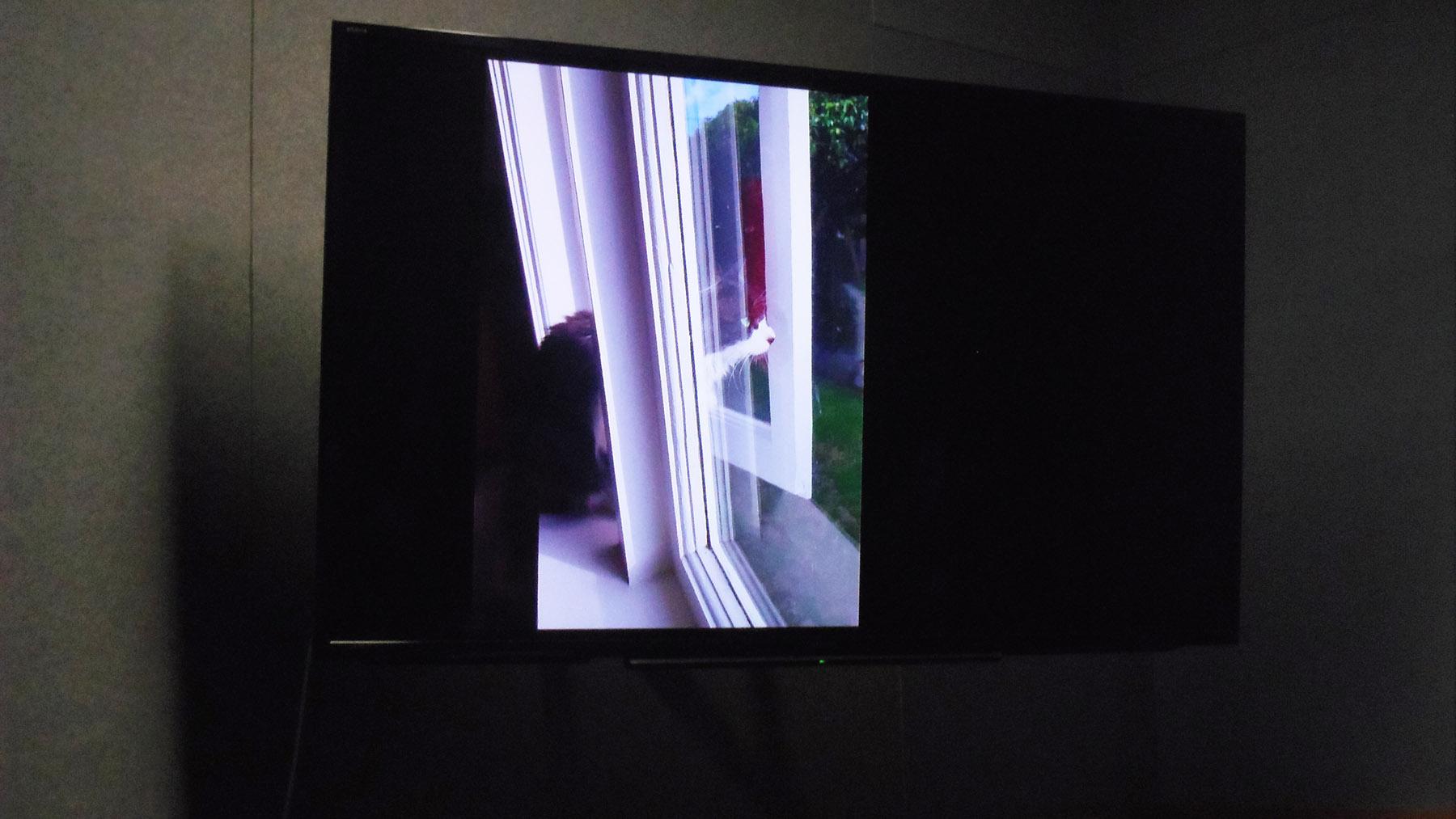 写真・図版 : 窓から出かけていくホルムズ博士の猫=筆者提供