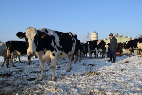 写真・図版 : 北海道で動物福祉を実践する酪農家の牧場=2月5日、高田誠撮影