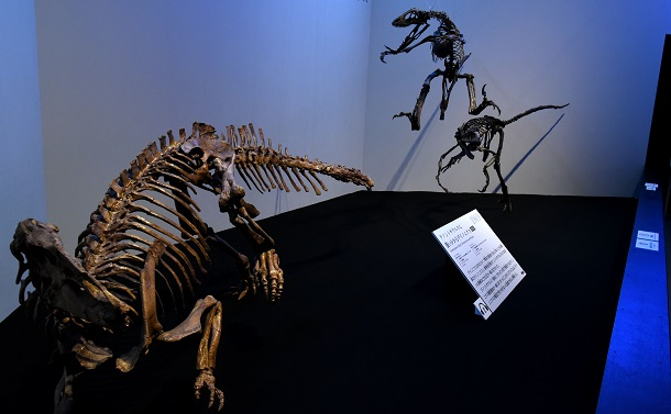 写真・図版 : デイノニクス(奥の2体)が襲いかかっているのはテノントサウルスだ=国立科学博物館「恐竜博2019」