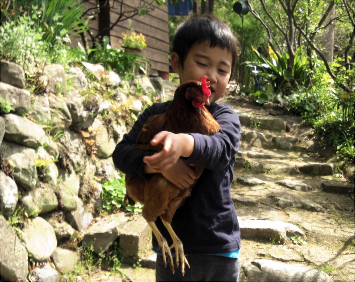 写真・図版 : 卵は自家養鶏で自給している。ニワトリは子どもたちのよい遊び相手でもある