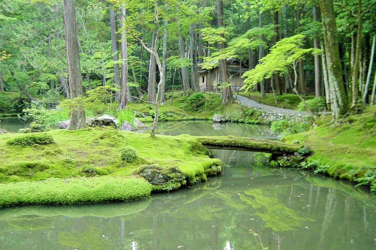 写真・図版 : 西芳寺の庭園は特別名勝。苔が美しく、「苔寺」と称される=京都市、筆者撮影