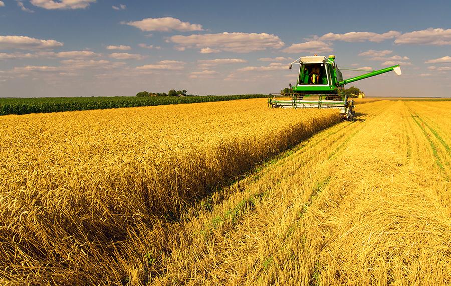 写真・図版 : ラウンドアップをめぐる動きは世界の食料供給にどう影響するか