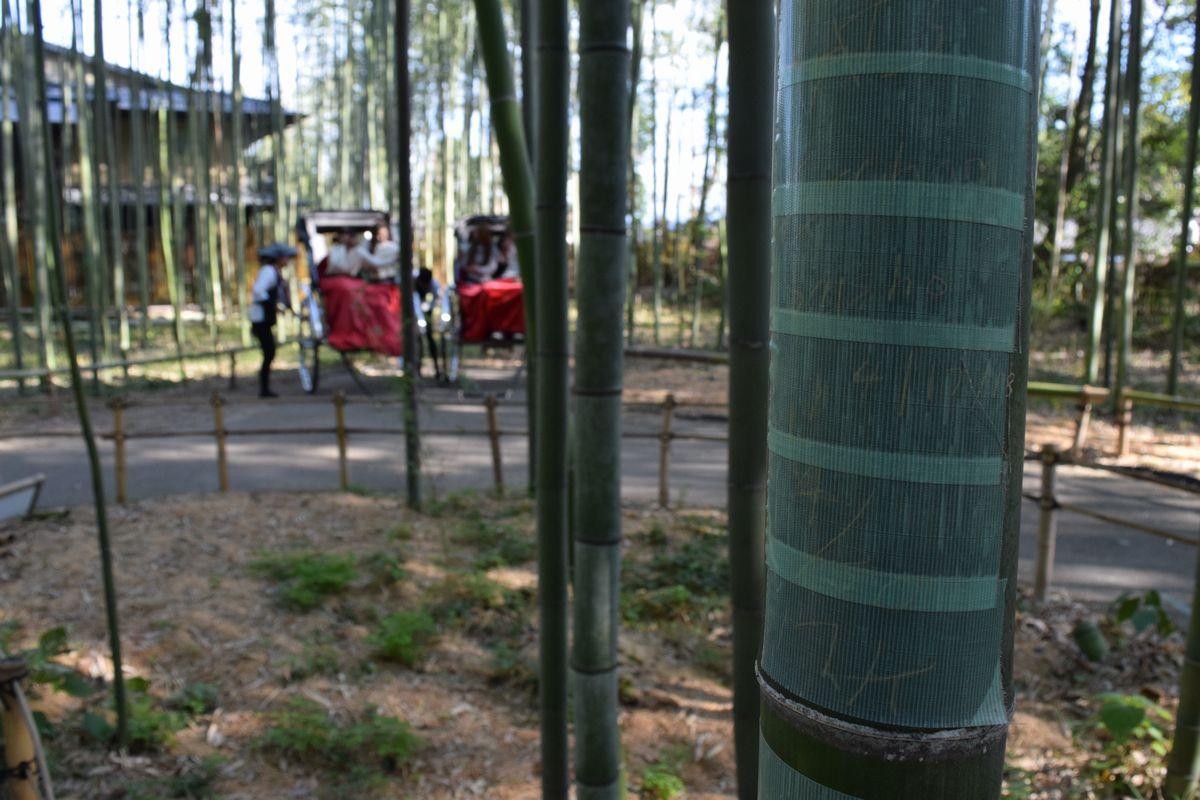 写真・図版 : 「竹林の散策路」。落書き被害にあった竹には緑のテープが貼られている=2018年11月18日、京都市右京区、徳永猛城撮影