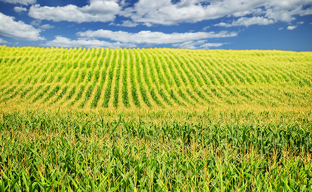 除草剤の使用禁止がもたらす世界の食糧危機