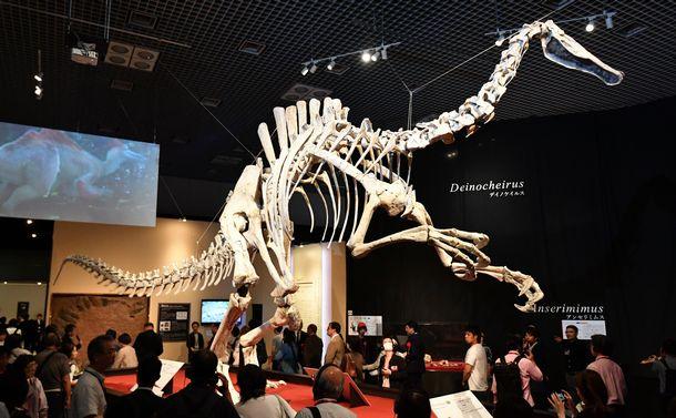写真・図版 : デイノケイルスの全身復元骨格。今回が世界初の公開だ=国立科学博物館、福留庸友撮影