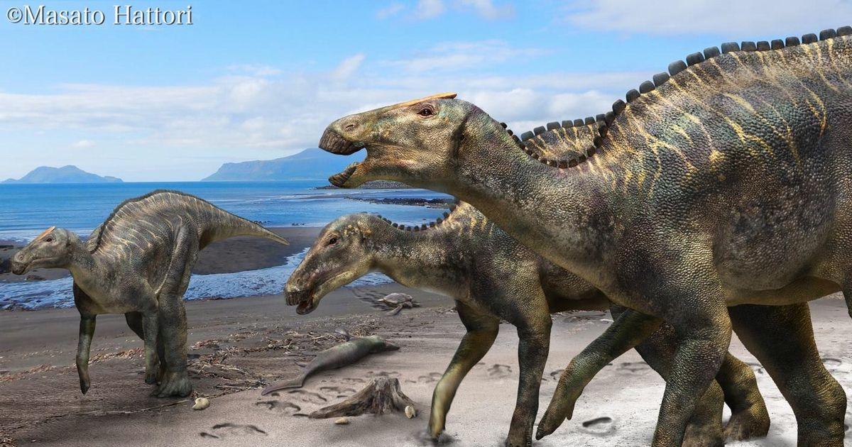 写真・図版 : 海岸にすむカムイサウルスの復元画=服部雅人氏提供