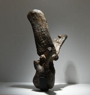 写真・図版 : カムイサウルスの胴椎(模型)。上にある神経弓が前傾しているのは固有の特徴だ=国立科学博物館、筆者撮影