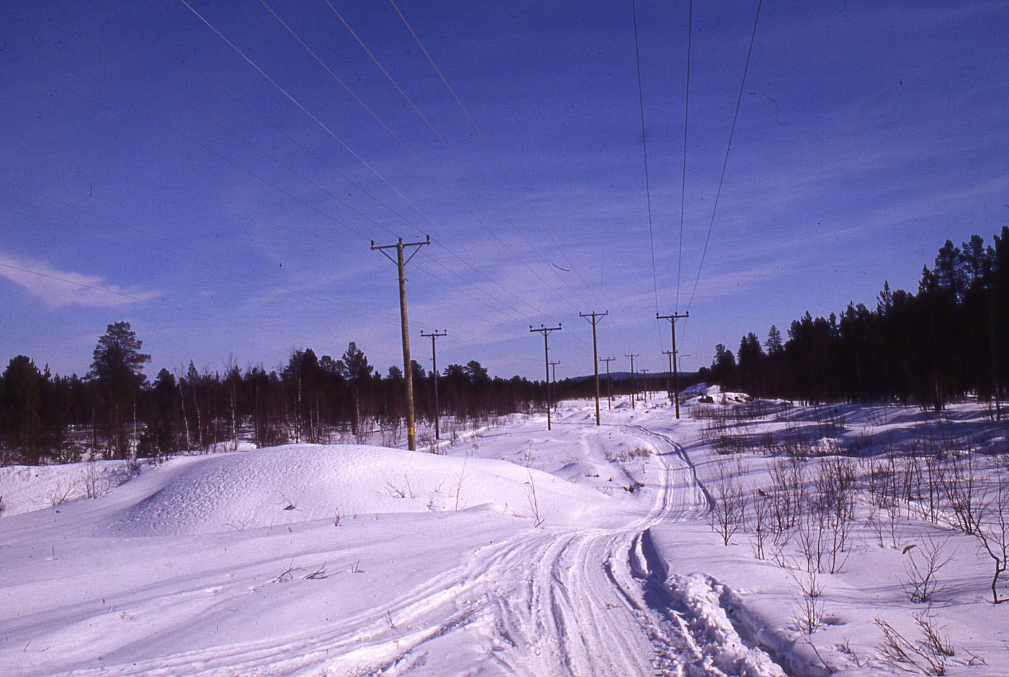 写真・図版 : スウェーデンの一般的な電柱と送電線