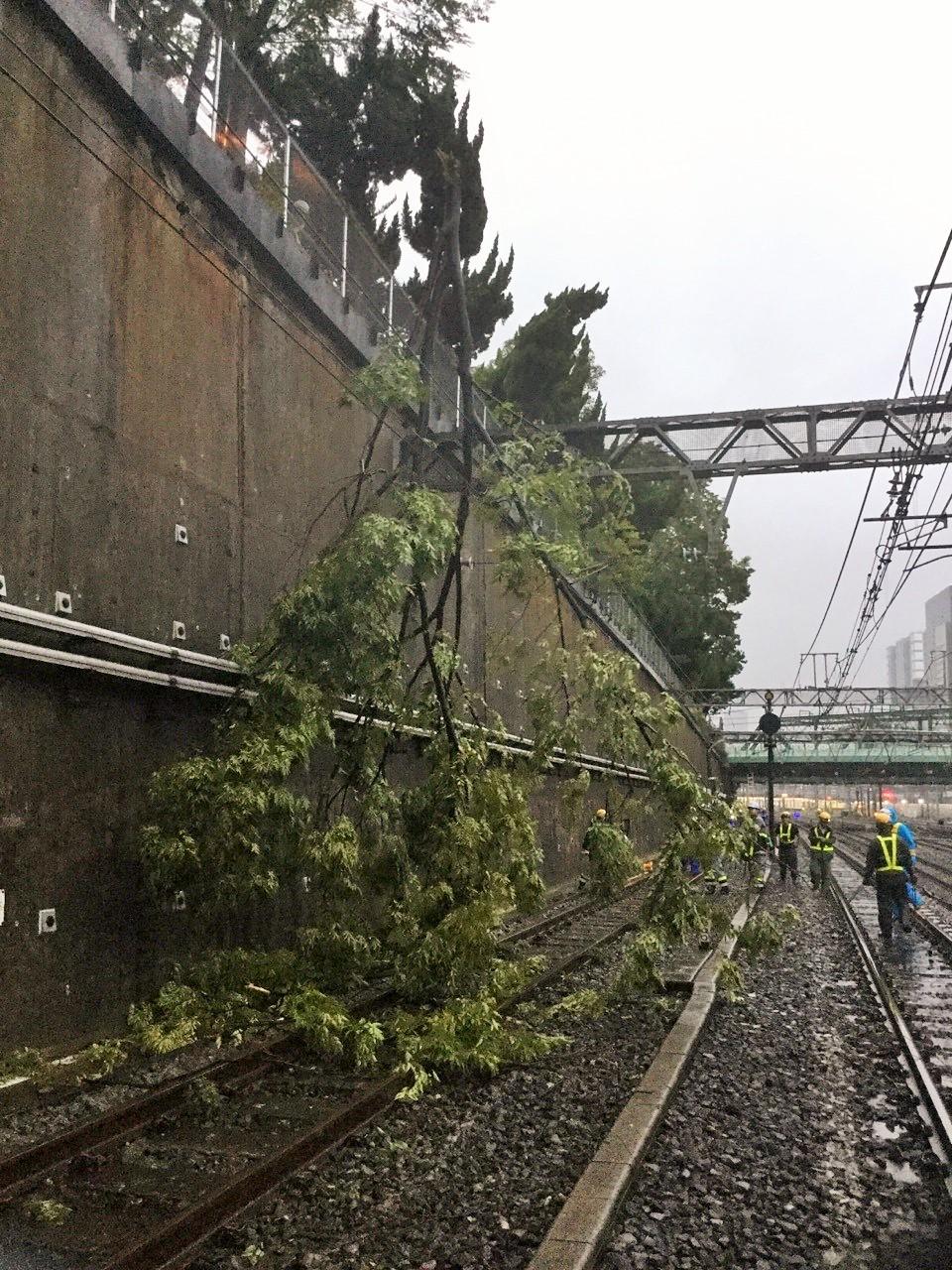 写真・図版 : JR山手線品川ー大崎間の線路をふさいだ倒木=2019年9月9日