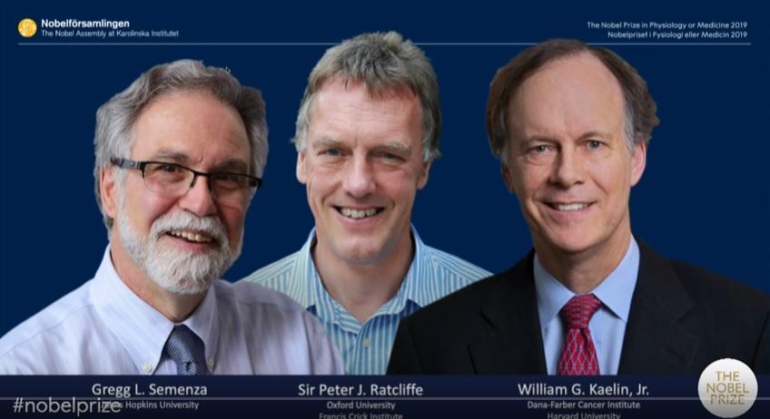 写真・図版 : 今年のノーベル医学生理学賞を受ける3人。左からグレッグ・セメンザ、ピーター・ラトクリフ、ウィリアム・ケーリンの各氏=ノーベル財団のyoutube映像から